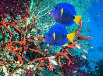Cuidemos la vida marina